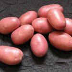 описание картофеля ред Скарлет