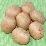 сорт картошки Аврора фото