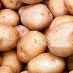 сорт картошки жуковский фото