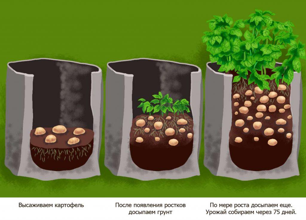 схема выращивания картошки в мешках