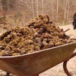 удобрение картошки навозом