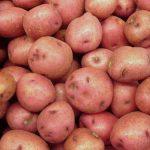 картошка симфония фото
