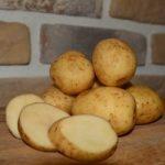 Картошка Янка фото