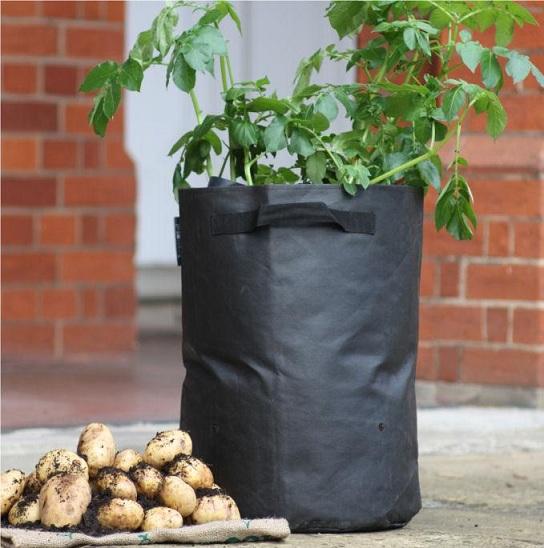 Выращивание картофеля: способы