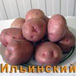ильинская картошка фото