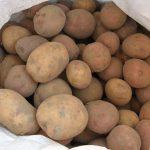 картошка криница фото