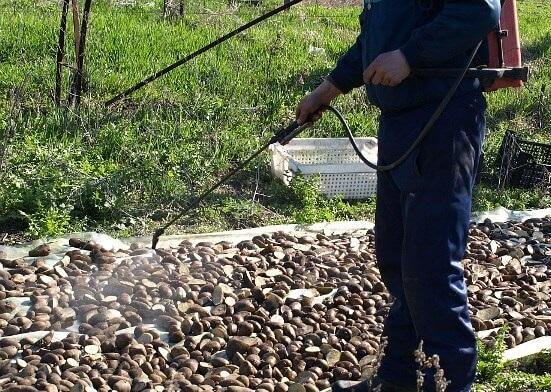 обработка картошки ядом от колорадского жука фото