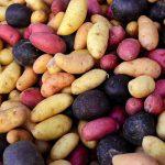 сорта картофеля фото