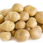 картошка сударыня фото