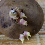 как лечиться картофельными ростками