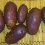 сорт картофеля чугунка фото