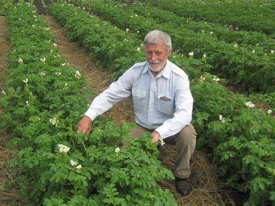 растим картошку по Митлайдеру