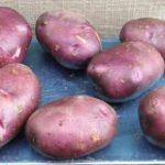 сорт картофеля голубой дуноай фото