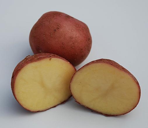 картофель югра описание сорта фото