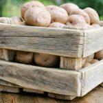 сколько хранится картошка