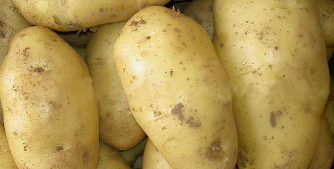 сорт картофеля сапрыкинский фото