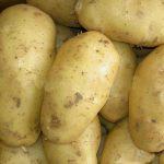 картошка кубанка фото
