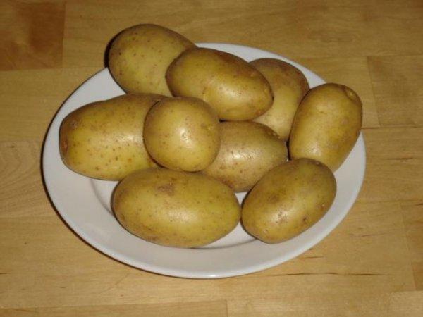 сорт картофеля кубанка фото