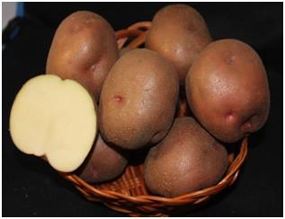 сорт картофеля малиновка фото