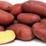 картошка Алена фото
