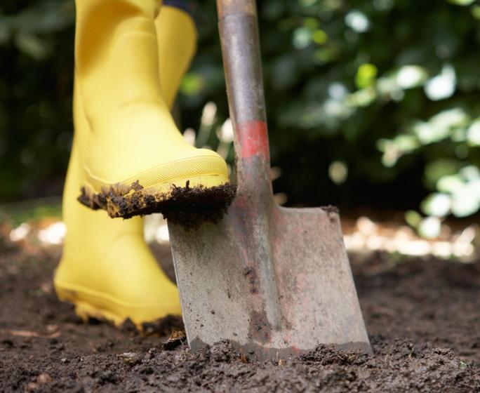 фото посадки картофеля в доджь