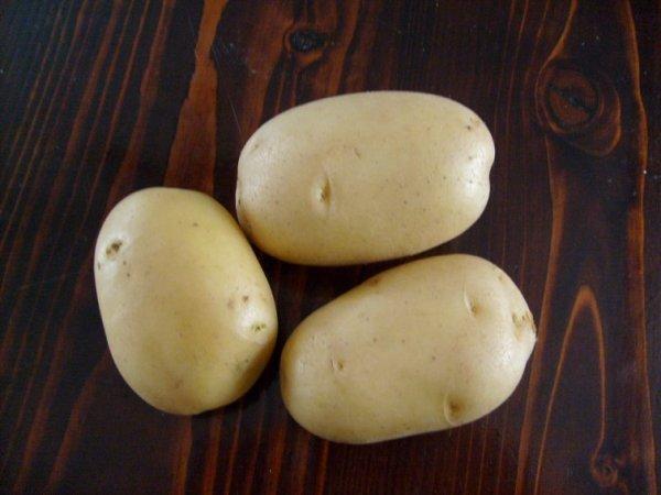 сорт картофеля лига фото