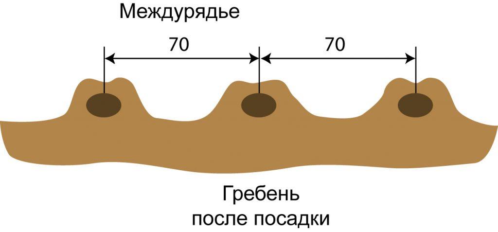 Схематическое изображение гребней в разрезе