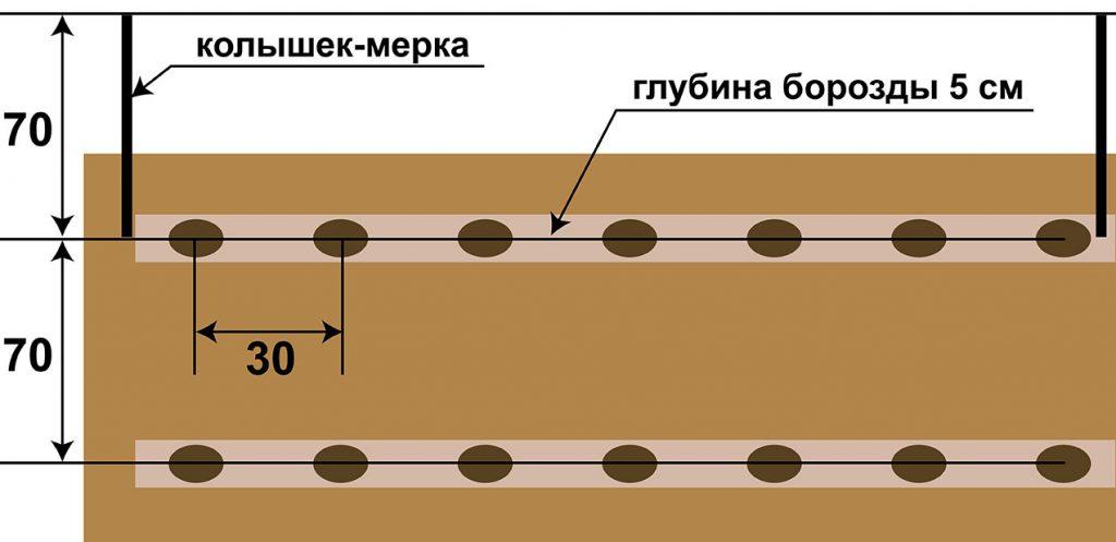 Схема посадки картофеля в траншеи фото