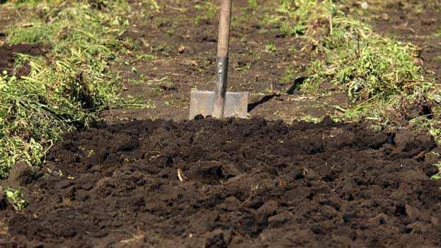 фото посадки картошки под лопату с удобранием в лунке