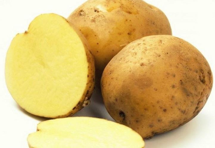 сорт картофеля альтаир фото