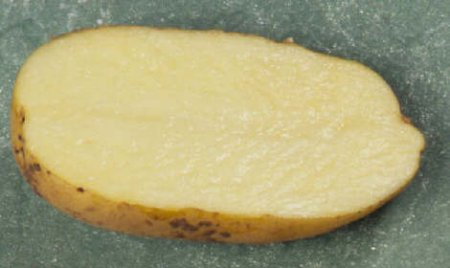 сорт картофеля фамбо