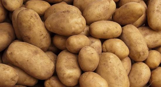 фото сорта картофеля петровский