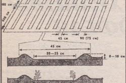 Схема участка с грядками, разбитыми по системе Миттлайдера фото