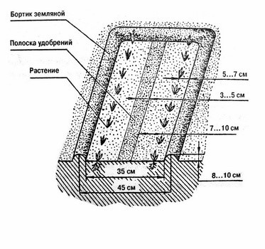 Схематическое изображение грядки, разбитой по системе Миттлайдера фото