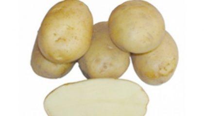 картошка азарт фото