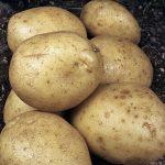 фото картошки лира