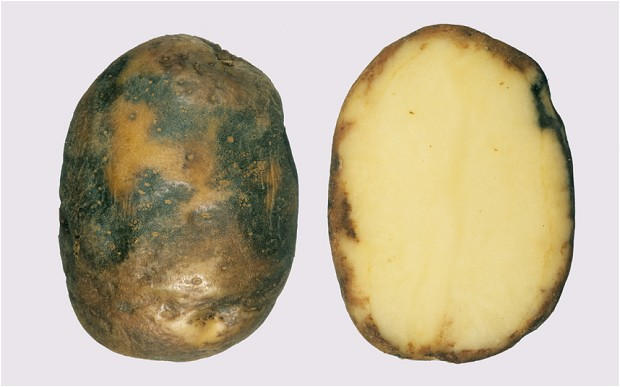фото ржавчины картофеля от фитофтороза