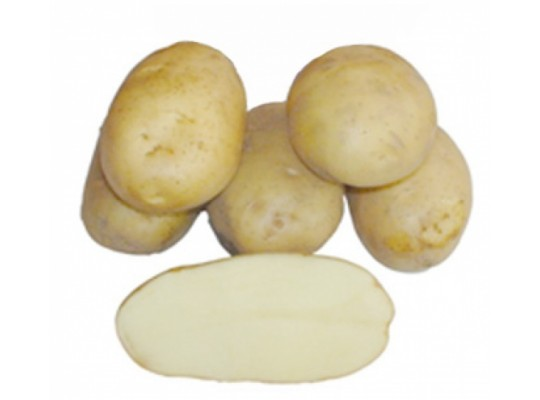 сорт картофеля барин фото