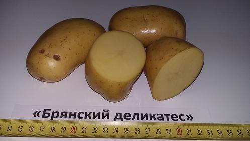фото сорта картофеля брянский деликатес