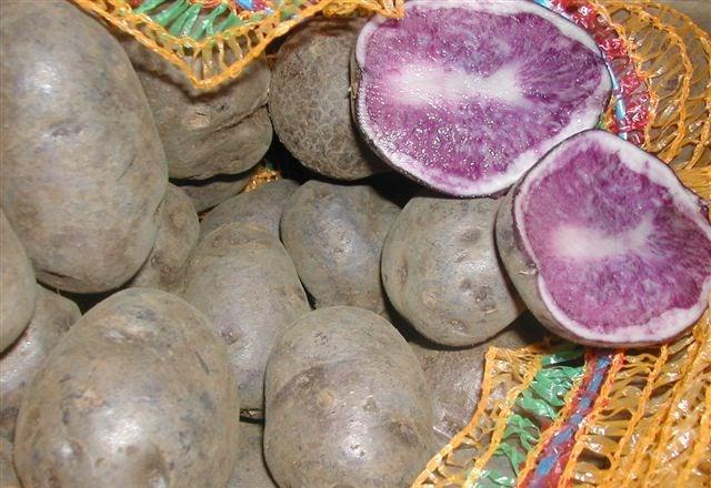 сорт картофеля гурман фото