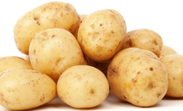 сорт картофеля триумф фото