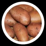фото картошки фаворит