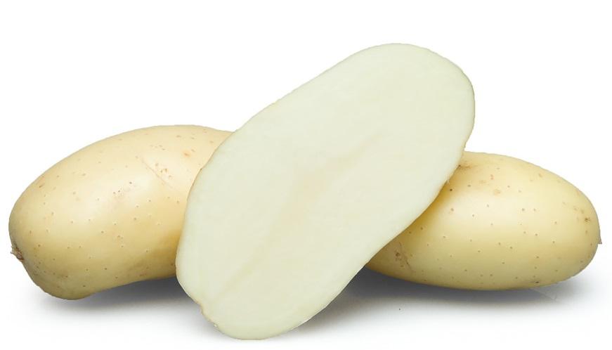 фото сорта картофеля бафана