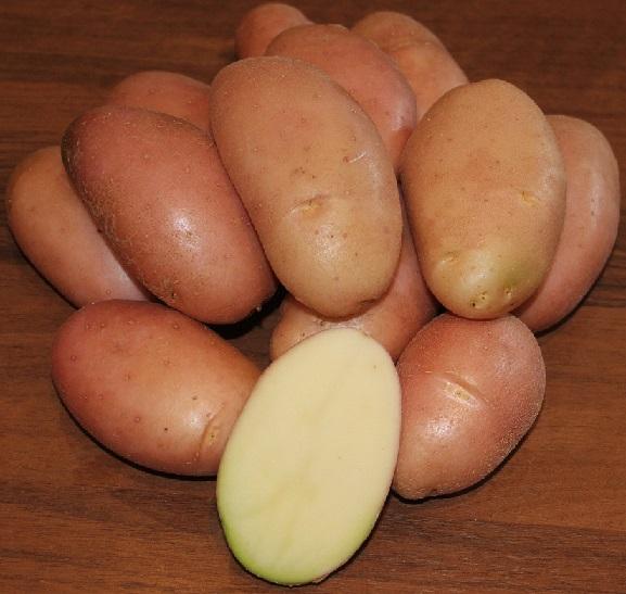 фото сорта картофеля фаворит