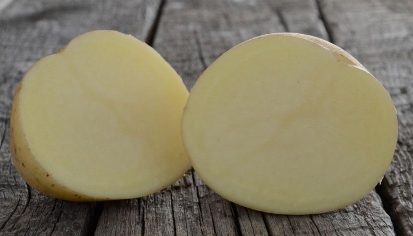 сорт картофеля лаперла фото