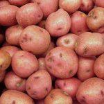 сорт картофеля радонежский фото