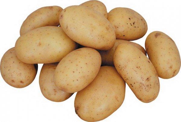 фото сорта картофеля сантана