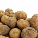 фото картошки боровичок