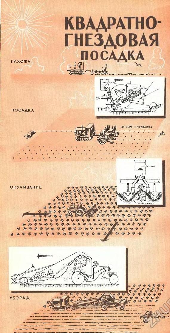 технология квадратно-гнездовой посадки картошки
