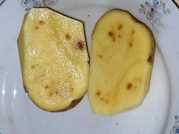 фото железной пятнистости картофеля